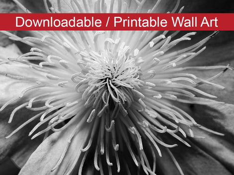 Center of Clematis Black and White Floral Nature Photo DIY Wall Decor Instant Download Print - Printable