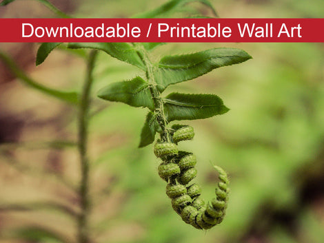 Growth of the Forest Floor Botanical Nature Photo DIY Wall Decor Instant Download Print - Printable