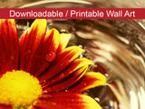 Digital Wall Art, Downloadable Prints, Floral Nature Photograph Floating Mum - Wall Decor Instant Download Print - Printable - PIPAFINEART
