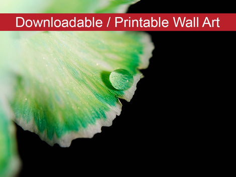 Water Droplet on Carnation Petal DIY Wall Decor Instant Download Print - Printable Wall Art