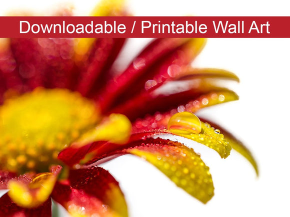 Digital Wall Art, Downloadable Prints, Floral Nature Photo Water Droplets On Mum Petals - Instant Download Print - Printable Wall Artwork