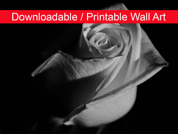 Digital Wall Art, Downloadable Prints, Floral Nature Photograph Rose on Black in Black and White - Wall Decor Instant - Printable