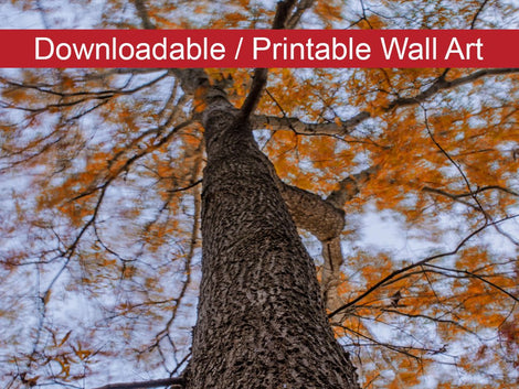 Wind in the Trees Botanical Nature Photo DIY Wall Decor Instant Download Print - Printable