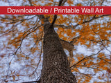 Digital Wall Art, Downloadable Prints, Botanical Nature Photograph Wind in the Trees - Wall Decor Instant Download Print - Printable