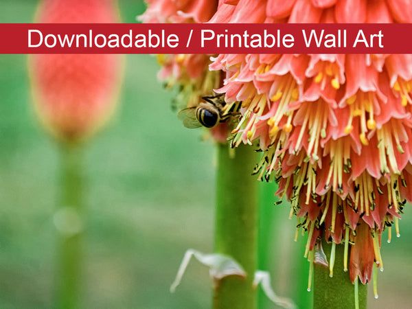 Digital Wall Art, Downloadable Prints, Floral Nature Photograph Red Hot Pokers - Wall Decor Instant Download Print - Printable