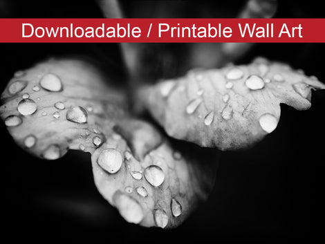 Raindrops on Wild Rose in Black and White Floral Nature Photo DIY Wall Decor Instant Download Print - Printable