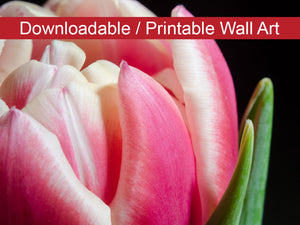 Digital Wall Art, Downloadable Prints, Floral Nature Photograph Pink and White Tulip - Wall Decor Instant Download Print - Printable