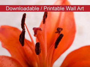 Digital Wall Art, Downloadable Prints, Floral Nature Photograph Lily Stigma - Wall Decor Instant Download Print - Printable