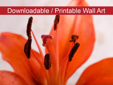 Lily Stigma Floral Nature Photo DIY Wall Decor Instant Download Print - Printable