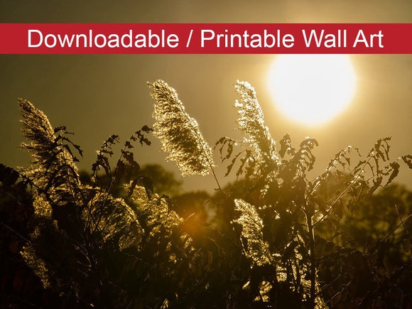 Digital Wall Art, Downloadable Prints, Botanical Nature Photograph Golden Marsh Weeds - Wall Decor Instant Download Print - Printable