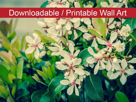 Indian Hawthorn Shrub Floral Nature Photo DIY Wall Decor Instant Download Print - Printable