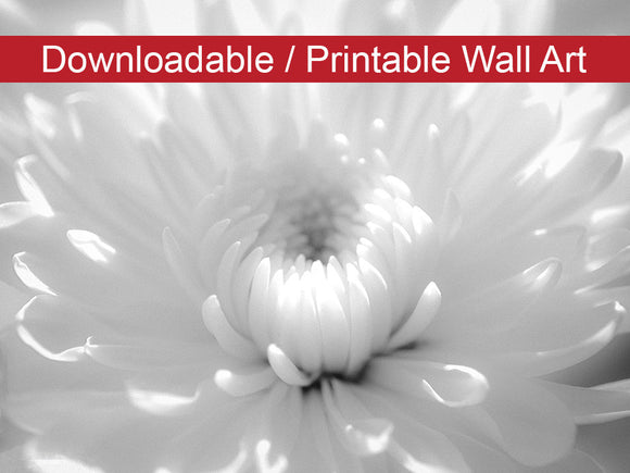 Digital Wall Art, Downloadable Prints, Floral Nature Photograph Infrared Flower - Wall Decor Instant Download Print - Printable