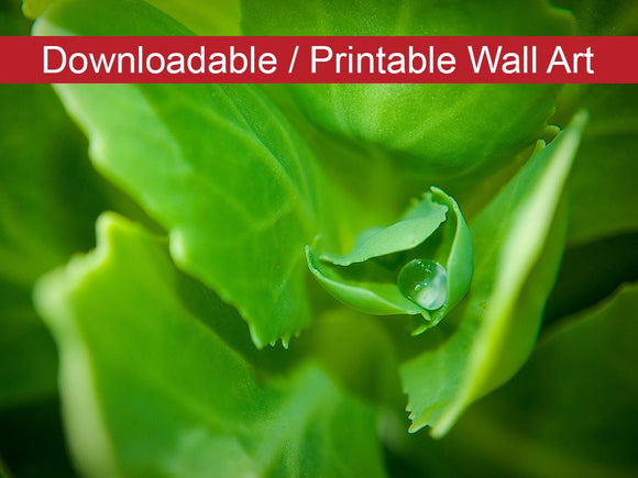 Digital Wall Art, Downloadable Prints, Botanical Nature Photograph Cupped Droplet - Wall Decor Instant Download Print - Printable