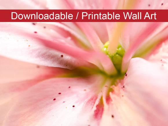Digital Wall Art, Downloadable Prints, Floral Nature Photograph Center of the Stargazer Lily - Wall Decor Instant Download Print - Printable