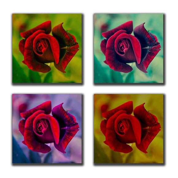 Square Rose Collection Limited Edition Signed Canvas Gallery Wraps - Fine Art Nature Photograph