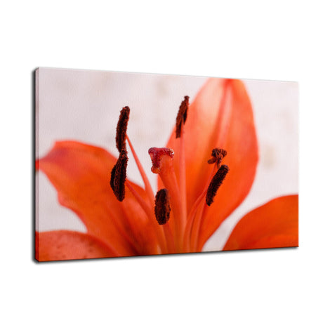Lily Stigma Nature / Floral Photo Fine Art Canvas Wall Art Prints