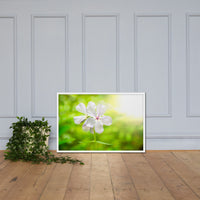 Beauty of the Forest Floor Floral Nature Photo Framed Wall Art Print White / 24×36 - PIPAFINEART