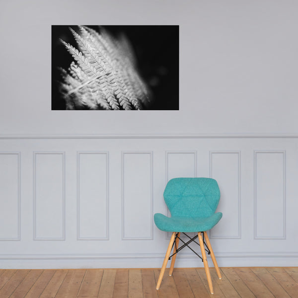 Fern Leaf In the Sunlight Black and White Botanical Nature Photo Loose Unframed Wall Art Prints 24×36 - PIPAFINEART