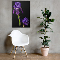 Iris on Black Floral Nature Canvas Wall Art Prints 24×36 - PIPAFINEART