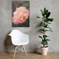 Pink and White Softened Rose Floral Nature Canvas Wall Art Prints 24×36 - PIPAFINEART