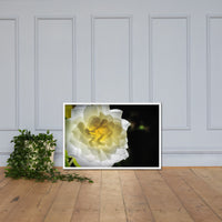 Glowing Rose 2 Floral Nature Photo Framed Wall Art Print White / 24×36 - PIPAFINEART