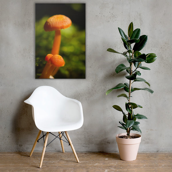Button Top Mushrooms Botanical Nature Canvas Wall Art Prints 24×36 - PIPAFINEART