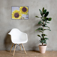 Aged Sunflowers Against Sky Floral Nature Canvas Wall Art Prints 18×24 - PIPAFINEART