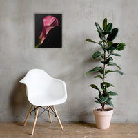 Pink Calla Lily Flower on Black Floral Nature Canvas Wall Art Prints 16×20 - PIPAFINEART