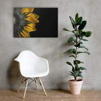 Backside of Sunflower Floral Nature Canvas Wall Art Prints 24×36 - PIPAFINEART