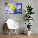 Actias Luna Larvae on Hydrangea Floral Nature Canvas Wall Art Prints 24×36 - PIPAFINEART