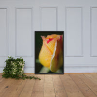 Dew on Yellow Rose Floral Nature Photo Framed Wall Art Print Black / 24×36 - PIPAFINEART