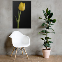 Yellow Tulip on Black Background 5 Floral Nature Canvas Wall Art Prints 24×36 - PIPAFINEART