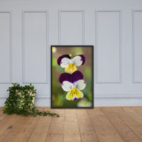 Pretty Little Violets Floral Nature Photo Framed Wall Art Print Black / 24×36 - PIPAFINEART