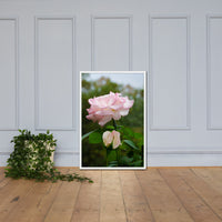 Admiration - Pink Rose Floral Nature Photo Framed Wall Art Print White / 24×36 - PIPAFINEART