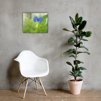 Asiatic Dayflower Floral Nature Canvas Wall Art Prints 16×20 - PIPAFINEART