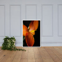 Orange Canna at Longwood Gardens Floral Nature Photo Framed Wall Art Print White / 24×36 - PIPAFINEART