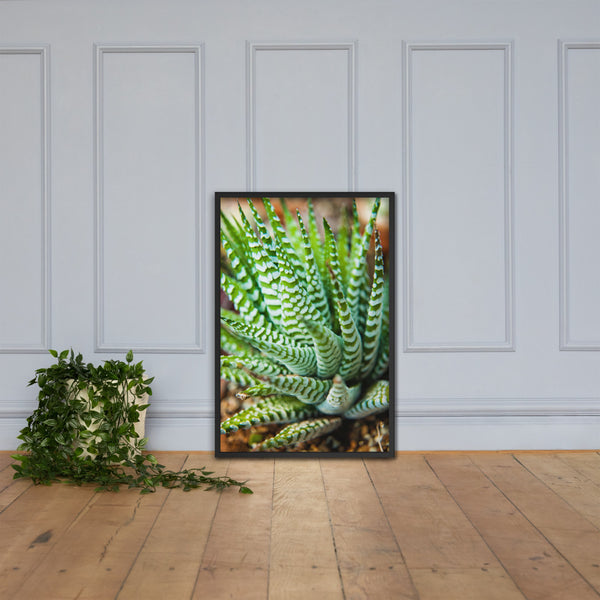 Succulent 2 Botanical Nature Photo Framed Wall Art Print Black / 24×36 - PIPAFINEART