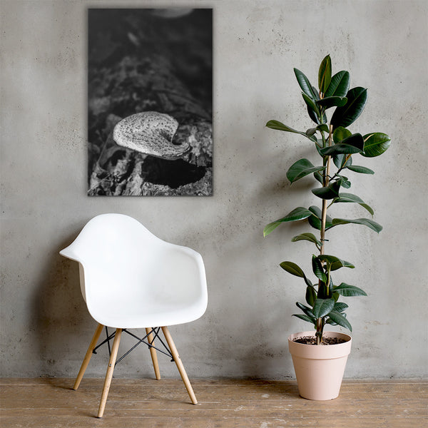Mushroom on Log Black and White Floral Nature Canvas Wall Art Prints 24×36 - PIPAFINEART