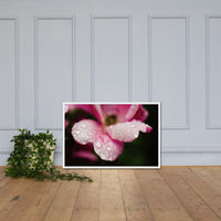 Raindrops on Wild Rose Color Floral Nature Photo Framed Wall Art Print White / 24×36 - PIPAFINEART