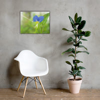 Asiatic Dayflower Floral Nature Canvas Wall Art Prints 18×24 - PIPAFINEART