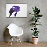 Iris On White Floral Nature Canvas Wall Art Prints 24×36 - PIPAFINEART