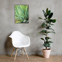 Succulent 2 Botanical Nature Canvas Wall Art Prints 18×24 - PIPAFINEART