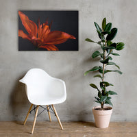 Orange Lily with Backlight Floral Nature Canvas Wall Art Prints 24×36 - PIPAFINEART