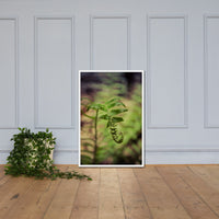 Growth of the Forest Floor Botanical Nature Photo Framed Wall Art Print White / 24×36 - PIPAFINEART