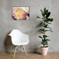 Close-up of Orchid Floral Nature Canvas Wall Art Prints 18×24 - PIPAFINEART