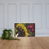 Dramatic Backside of Sunflower Grain Floral Photo Framed Wall Art Print White / 24×36 - PIPAFINEART