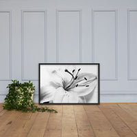 High Key Lily Black and White Floral Nature Photo Framed Wall Art Print Black / 24×36 - PIPAFINEART