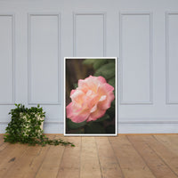 Pink and White Softened Rose Floral Nature Photo Framed Wall Art Print White / 24×36 - PIPAFINEART
