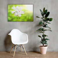 Beauty of the Forest Floor Floral Nature Canvas Wall Art Prints 24×36 - PIPAFINEART