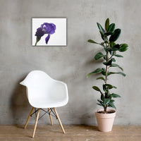 Iris On White Floral Nature Canvas Wall Art Prints 16×20 - PIPAFINEART